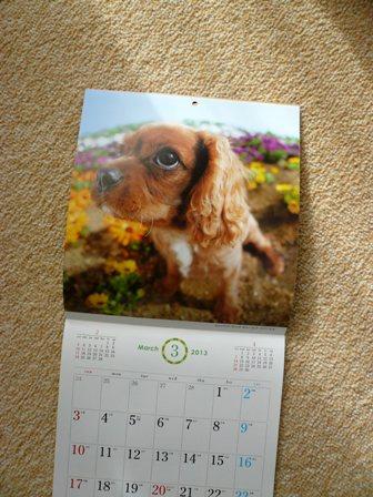 動物病院カレンダー