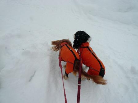 雪が降ってもお散歩