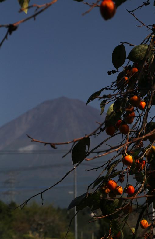 富士山と柿-619-1