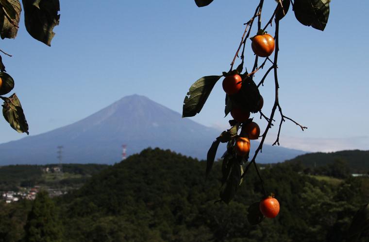 富士山と柿-632-2