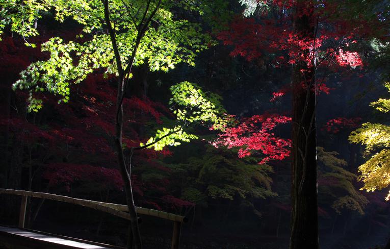 小国神社-315-2