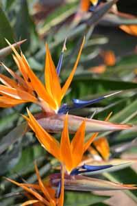 Flower_Bird1.jpg