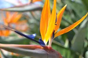 Flower_Bird2.jpg