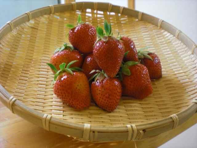 苺④.jpg
