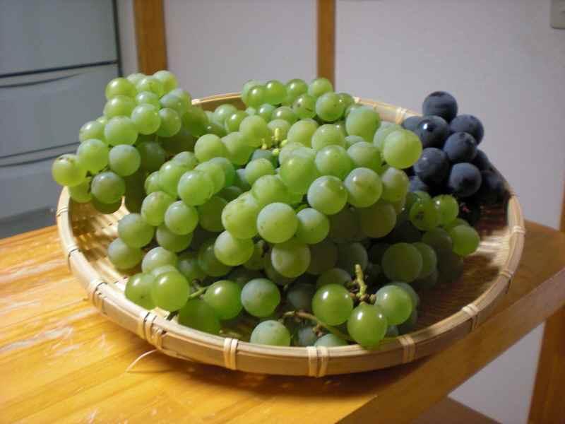 葡萄収穫.jpg