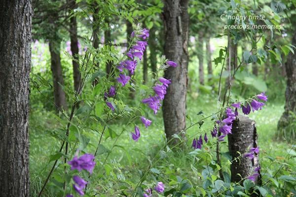 紫竹ガーデン7