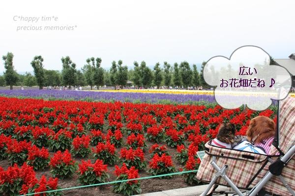 広いお花畑