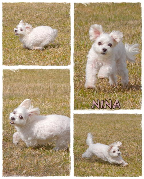ニーナ走る