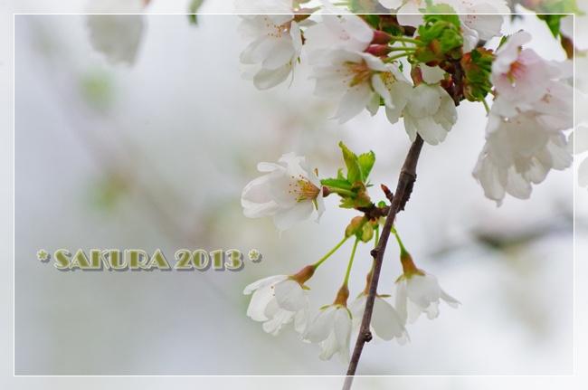 4月20日 022