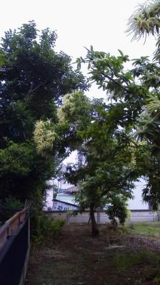 20120612 (7)