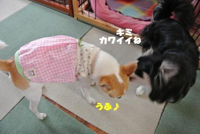 20130607+006_convert_20130607100810.jpg
