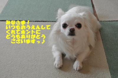 20130607+022_convert_20130621132001.jpg