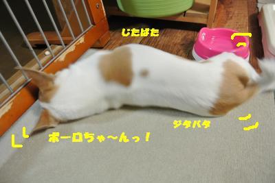 20130611+009_convert_20130611095136.jpg