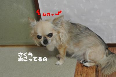 20130621+025_convert_20130621101451.jpg