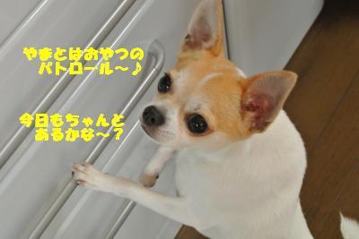 20130625+006_convert_20130625101916.jpg