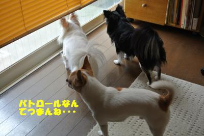 20130625+011_convert_20130625102108.jpg