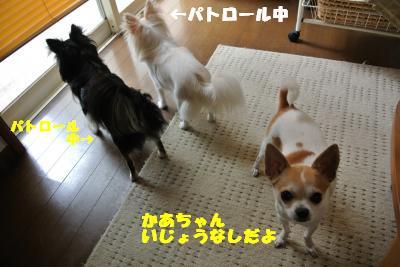 20130625+013_convert_20130625103604.jpg