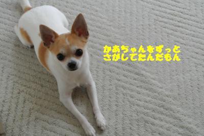 20130626+014_convert_20130627103712.jpg