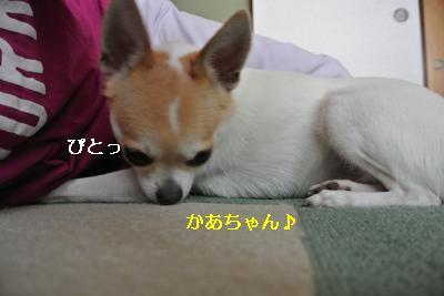 20130630+005_convert_20130630160127.jpg