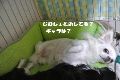 20130702+016_convert_20130702095359.jpg
