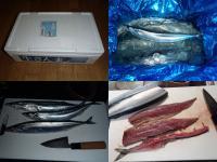 秋刀魚贈答