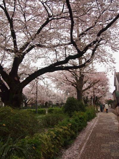 国立桜わとわ前