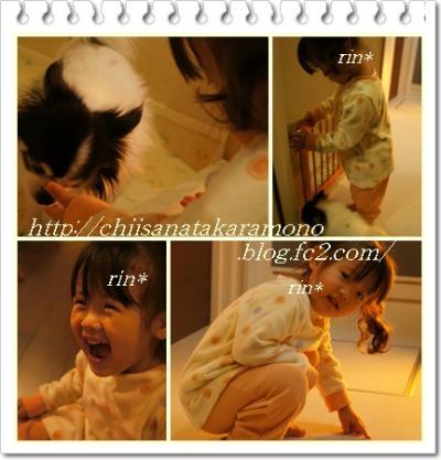 cats6_convert_20121226170944.jpg
