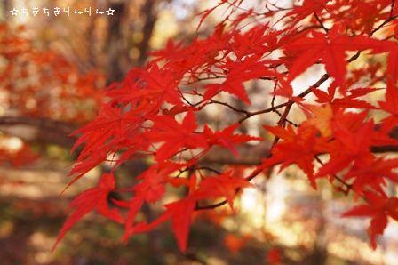 森林公園ツアー②