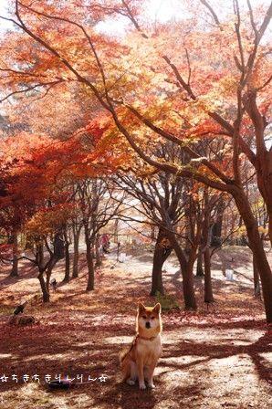 森林公園ツアー⑤