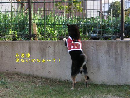 近所散歩凜