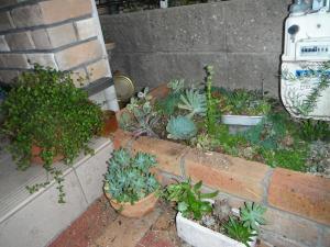 花壇をいじいじ