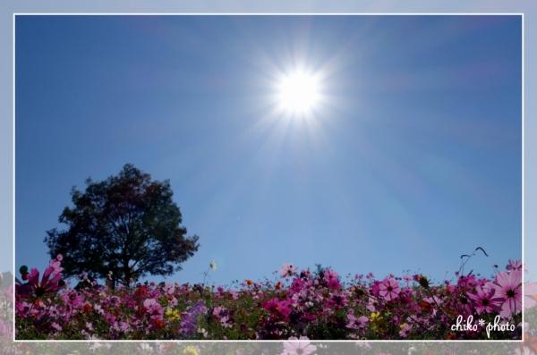 photo-550 花の丘にて1