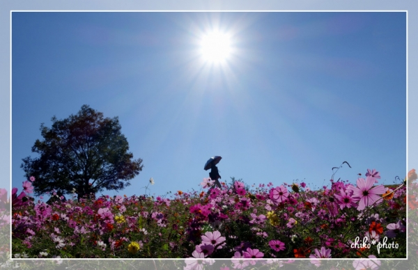 photo-550 花の丘にて2
