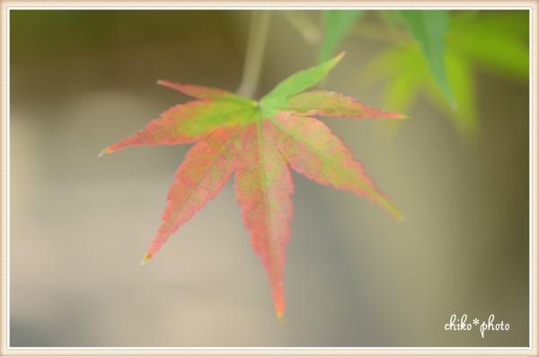 photo-572 初秋色4