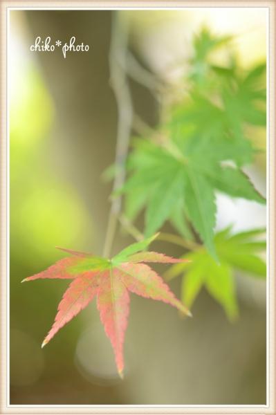 photo-573 初秋色5