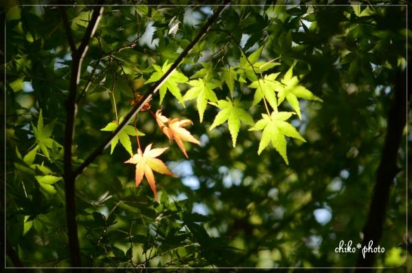 photo-574 初秋色6