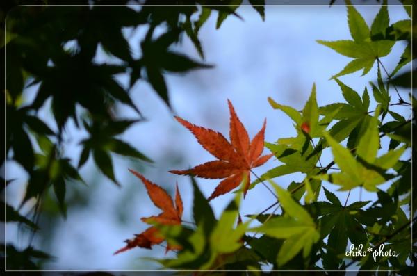 photo-575 初秋色7