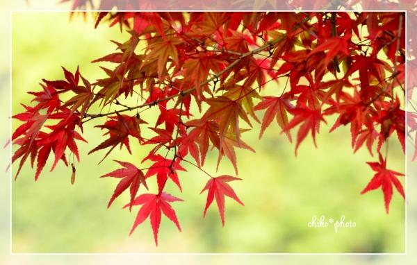 photo-577 そして、秋色1