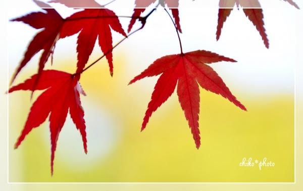 photo-577 そして、秋色2