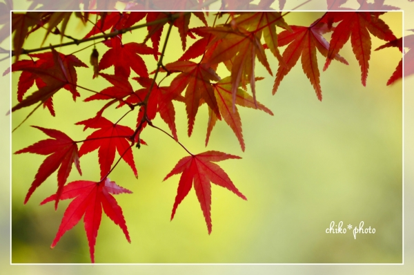 photo-577 そして、秋色3