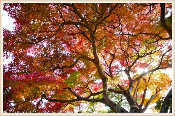 photo-578 秋色グラデーション1