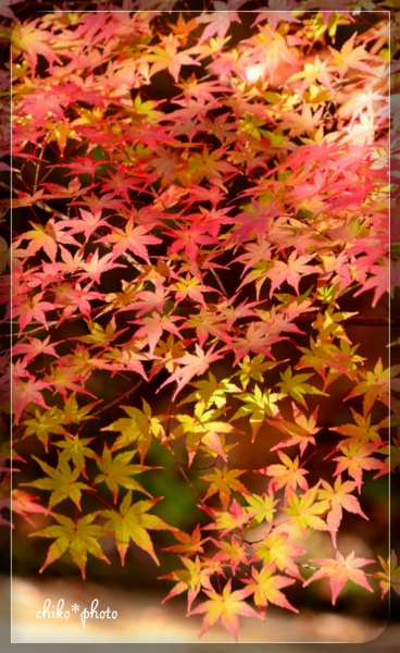 photo-579 秋色グラデーション1