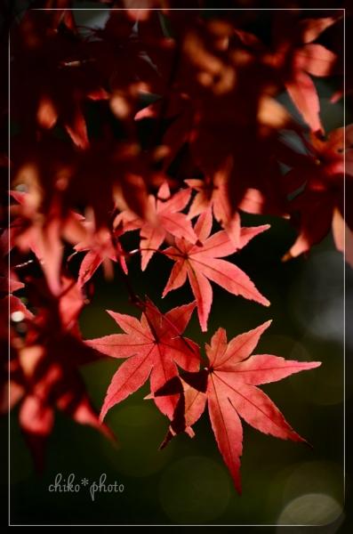 photo-581 秋の木洩れ日2