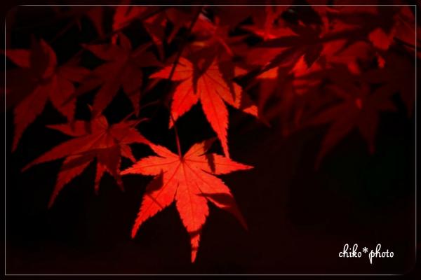 photo-578 そして、秋色2_2