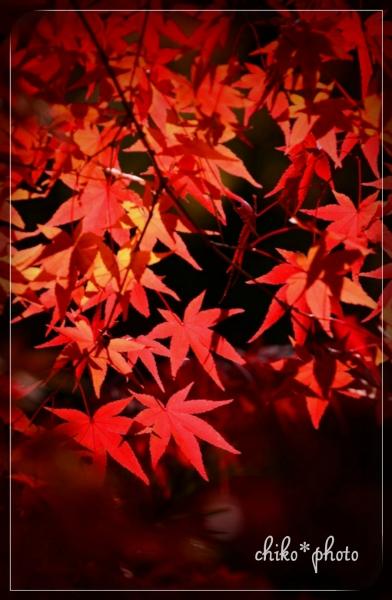 photo-578 そして、秋色2_1
