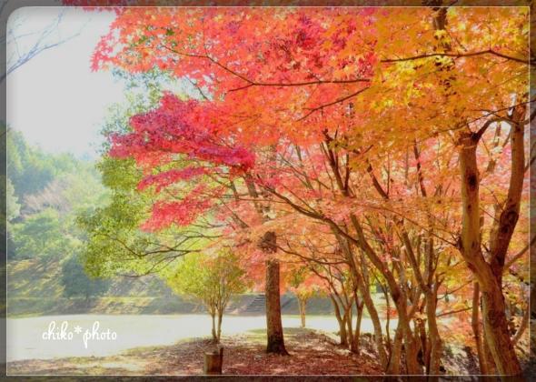 photo-580 紅葉の風景1