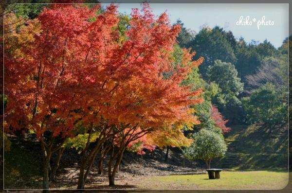 photo-581 紅葉の風景2