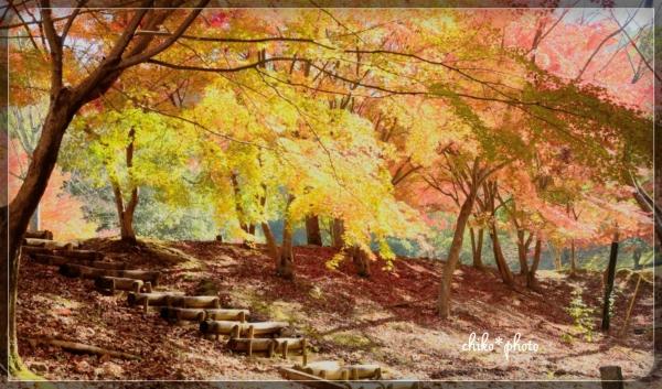 photo-582 紅葉の風景3