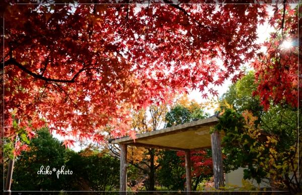 photo-583 紅葉の風景4