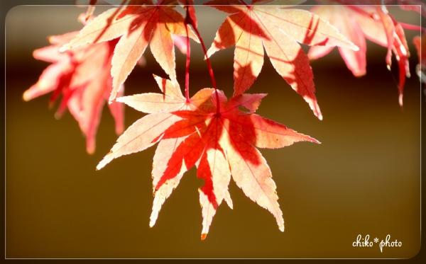photo-584 秋の木洩れ日1